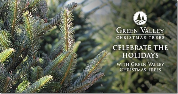 the real deal green valley christmas trees vs big box store christmas trees beckys farmhouse